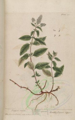 mint-00039 - Pepper-mint, mentha piperis sapore [3286x5256]