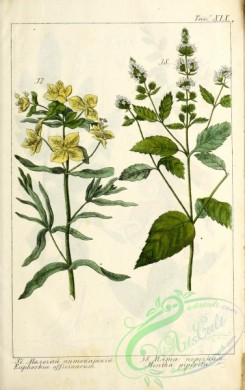 mint-00100 - euphorbia officinarum, mentha piperita