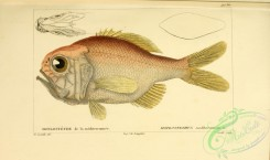 monster_fishes-00006 - hoplostethus mediterranneus (uL)