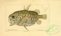monster_fishes-00007 - Pineconefish