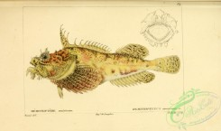 monster_fishes-00010 - Sea Raven