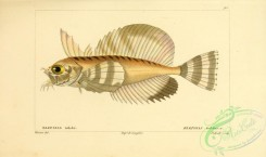 monster_fishes-00011 - Silverspotted Sculpin