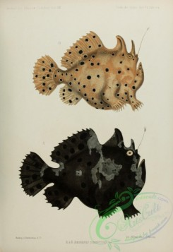 monster_fishes-00014 - Commerson'S Frogfish, 3