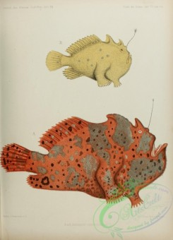 monster_fishes-00015 - Commerson'S Frogfish, 4