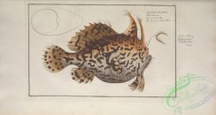 monster_fishes-00020 - American Toad-Fish, lophius histrio