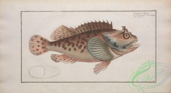 monster_fishes-00022 - scorpaena porcus
