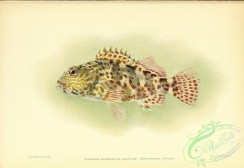 monster_fishes-00043 - 070-cirrhites marmoratus