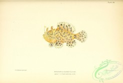 monster_fishes-00047 - 048-Striated Frogfish, antennarius scaber