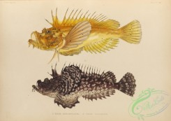 monster_fishes-00051 - 029-pelor aurantiacum, pelor japonicum