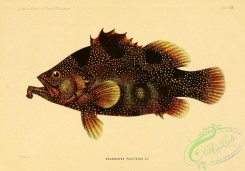 monster_fishes-00055 - 013-grammistes punctatus