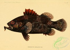 monster_fishes-00056 - 014-Indian Soapfish, grammistes ocellatus