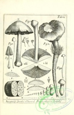 mushrooms-07669 - 140