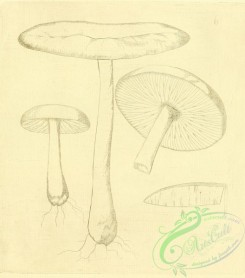mushrooms-07772 - 031