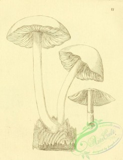 mushrooms-07777 - 036