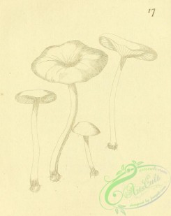 mushrooms-07783 - 042