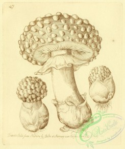 mushrooms-07810 - 069