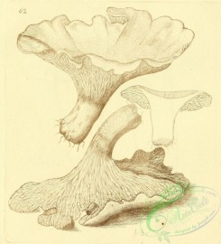 mushrooms-07826 - 085