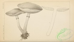 mushrooms_bw-00052 - 176-unspecified