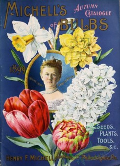 narcissus-00131 - 060-Queen, Woman, Tulips, Hyacinthus, Daffodil, Narcissus