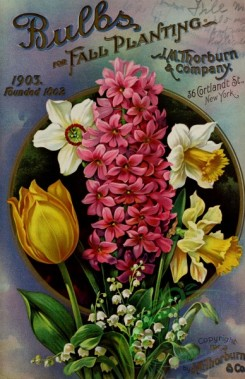 narcissus-00140 - 051-Hyacinthus, Narcissus, Tulips, Round frame