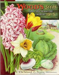 narcissus-00162 - 074-Hyacinthus, Tulips, Narcissus, Cabbage, Turnip, House, Road, Flowerbed, Wooden Frame