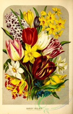 narcissus-00184 - polyanthus narcissus, narcissus poeticus, trumpet narcissus, early tulips, late tulip, double yellow tulip, parrot tulip, crocus, single hyacinth, scilla
