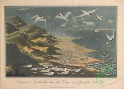 nature_and_art-00002 - 001-Landscape with Terns