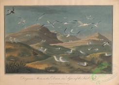 nature_and_art-00003 - 002-Landscape with Terns
