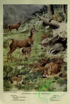 nature_and_art-00019 - 002-Red-deer, Stag, Rabbit, Wild-cat, Badger, Fox