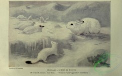 nature_and_art-00020 - 003-Highland animals in winter
