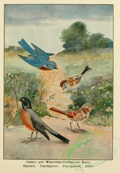 nature_and_art-00024 - 001-Insect- and Weed-seed-destroying Birds, Bluebird, Tree Sparrow, Fox Sparrow, Robin