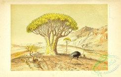 nature_and_art-00092 - 026-Landscape with Tree and Ostrich