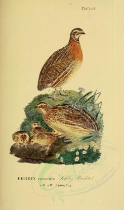 nestlings-00192 - Grey Partridge [1945x3270]