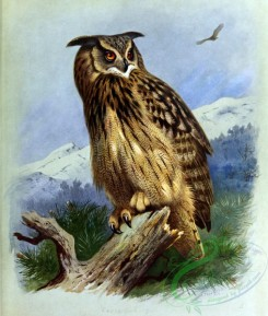 owls-00083 - Eagle-Owl