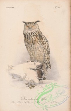 owls-00143 - 091-strix sibirica