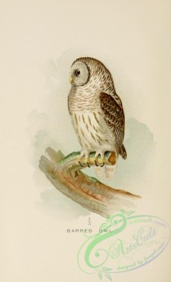 owls-00214 - Barred Owl