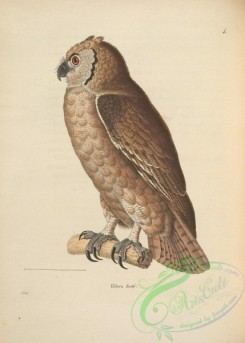 owls-00250 - Verreaux's Eagle-Owl