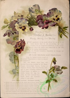 pansy-00154 - 092-Pansies, letter, paper, page, scroll, frame