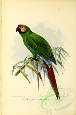 parrots_birds-00596 - Military Macaw
