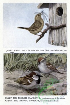 passerines-00120 - ENGLISH SPARROW, CHIPPING SPARROW