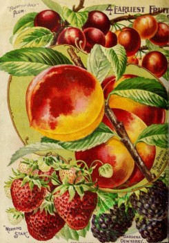 peach-01323 - 056-Plum, Peach, Strawberry, Dewberry