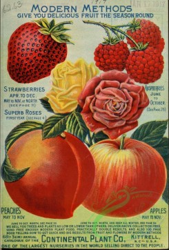 peach-01499 - 047-Strawberry, Peach, Apple, Roses, Raspberry
