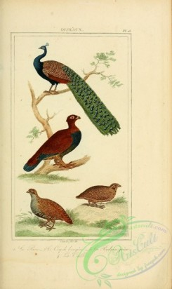 peacocks_and_pheasants-00025 - 021-Paon, Cock, perdix grise, caille, Peacock