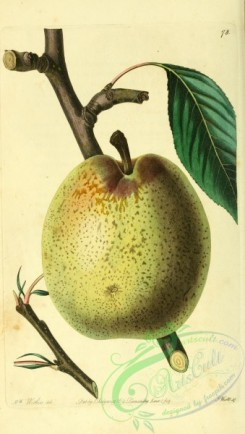 pear-00006 - Easter Beurree Pear [2088x3685]