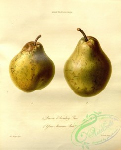 pear-00463 - Beurree d'Aremberg Pear, Gloux Morceaux Pear [3379x4202]