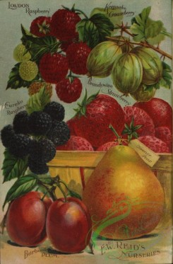 pear-01123 - 098-Plum, Pear, Strawberry in box, Gooseberry, Raspberry