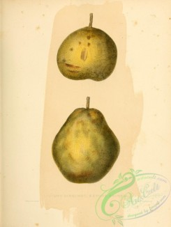 pear-01145 - Autumn Bergamot Pear, Swang Orange Pear