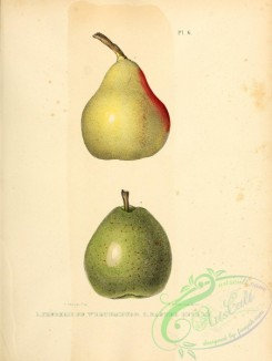 pear-01154 - Frederic de Wurtemburg Pear, Easter Beurre Pear