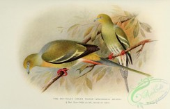 pigeons-00551 - Pin-tailed Green Pigeon
