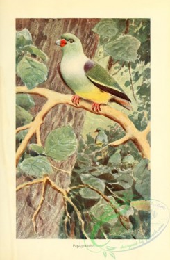 pigeons-00584 - African Green-Pigeon